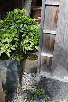 Kyoto Kiyomizu-dera Wasserbecken